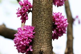 花与树影评-摄影作品 花 树 相机