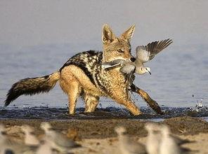2008年度英国野生动植物摄影大赛作品