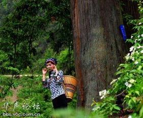 老根想丁香大喇叭曲是谁吹的-木叶这个最古老、最天然的乐器,吹木叶这个最原始、最纯粹的音乐艺...