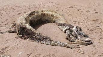 南山兵哥大长茎-中新网7月21日电 据英国媒体20日报道,英国一对夫妇近日在海滩发现...