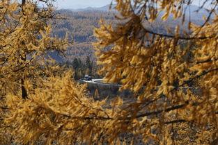 后来的雪-帝都的最后一抹秋色已经被雪后凌厉的北风抹杀在枝头.在冻得瑟瑟发...