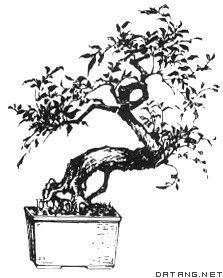 ...lastic flower pot,音标,读音,翻译,英文例句,英语词典
