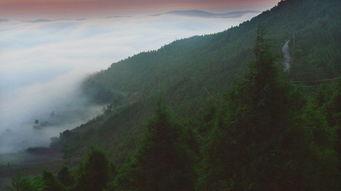 商路雄途-盐亭高山森林公园位于盐亭县云溪镇西,属国家森林公园.高山森林公...