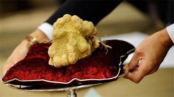 花荫露- 烧钱手段十一:花数十万买一块奇形怪状的菌类.2013年俄罗斯亿万...