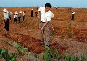 如何成为成功的农民企业家