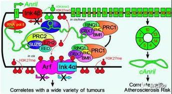RNA二级结构预测软件