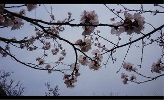 设想从前的荣家人,初春便在这里温上一壶酒,以开满枝头的梅花为...