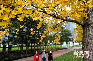 叶落苍穹-【新民网讯】据新闻晨报报道,上海市绿化市容局日前公布了18条落叶...