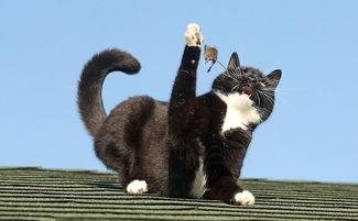 ...21;.这系列照片生动有趣,让人不禁想到风靡全球的动画片《猫和老...