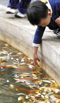 池塘里的观赏鱼在一夜之间死了上万尾记者 /摄 -上万观赏鱼翻肚池中捞...