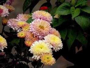 ...花开满枝,蜂藏蝶隐仲冬时 莫嫌艳丽惊眸晚,唯笑风流早与迟