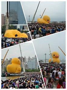...米的黄色小鸭,亚洲最大的黄色小鸭顺利抵达码头.看到?-小黄鸭正...
