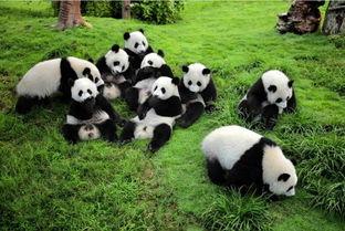...乐山 都江堰 熊猫基地三日游
