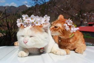 超级憨态可爱的猫叔图片 第二辑