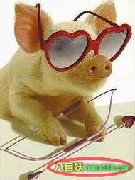如何画一只卡通猪的简笔画