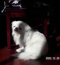 我的小狗狗去天堂了 猪猪宁, 每天都会想你