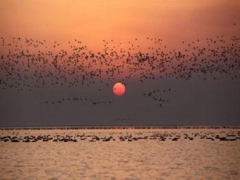 鄱阳湖候鸟保护区门票