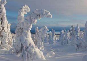 描写冬天自然景象的古诗词句