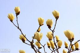 七枫花32部合集-昨天散溜中山公园,散拍花草树木 ... <IMG>