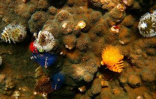 海底五彩鱼(金鱼)