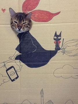 """骑着扫帚的\""""女巫猫\""""-与涂鸦 混搭 猫咪倾情演绎女巫 恐龙 马里奥"""