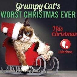 ...遇上不爽猫再遇怒颜加菲猫