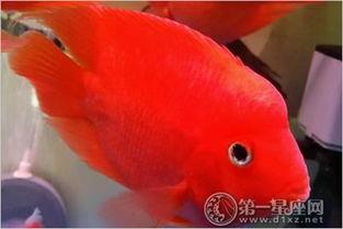 财神鱼图片欣赏,了解财神鱼究竟长什么样