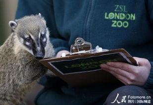 实拍英国动物园盘点动物数量
