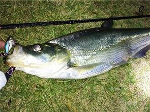 ...分享夏季路亚翘嘴鱼的经验 中