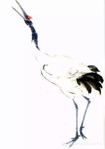 怎样画丹顶鹤