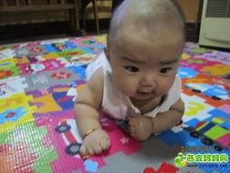 想和我一起陪小熊玩吗? O(∩_∩)O哈哈~-壮壮 4个多月 男宝 先混个脸...