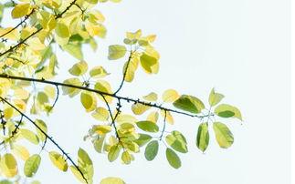 小清新绿色树叶唯美高清图片壁纸高清大图预览1920 1200 植物壁纸下...