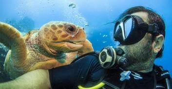 百香果柠檬蜜鸣人vs佩恩-据英国《每日邮报》7月7日报道,野生动物摄影师日前在巴哈马潜水时...