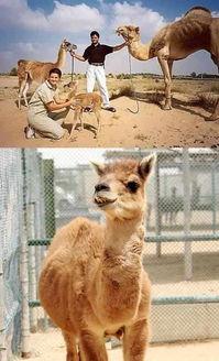 世界十大奇特杂交动物 让人怀疑是经过图片处理的