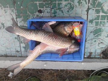今天我钓到鱼啦.......