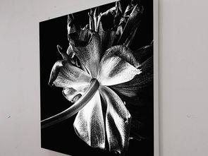 现代简约黑白花卉静物摄影装饰画