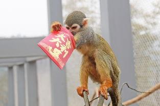 五月丁香啪啪给- 2016年2月9日,在重庆乐和乐都野生动物世界里,就出现了这么一件...