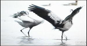 描写鸟的诗句古诗-回复 11 查看 203 标题 如诗如画鸟世界