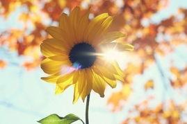 美艳绽放的花朵