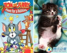 汤姆来自:《猫和老鼠》原型:四蹄踏雪斑纹田园猫&...