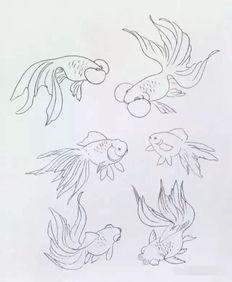 如何画鲤鱼简笔画