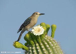 怎样跟野生鸟类建立感情
