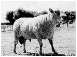 ...前苏联等国人与动物杂交实验