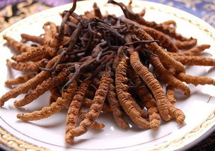冬虫夏草怎么吃最好 这样吃最健康
