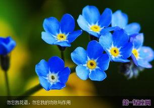 描写鲜花绽放的诗句-...么花 6月夏季开放的花及花语图片介绍