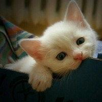 表情 qq可爱头像好看呆萌猫猫头像 捉到一只小萌宝 表情