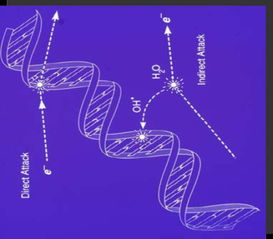磁力链媲美欣65 下载-3、分子组成及性质的改变,细胞早期死亡;阻止或延迟细胞分裂;细...