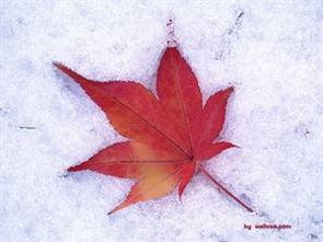 描写雪的诗句