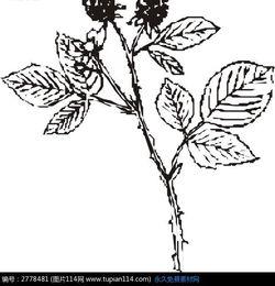 花草树木简笔画-线描图果子矢量素材