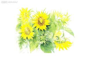 水彩花卉 水彩蝴蝶 工笔花卉 建筑水彩渲染